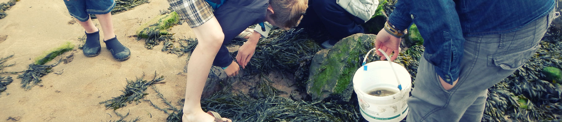 Beach ecology activity at Shoreline in Bude, Cornwall